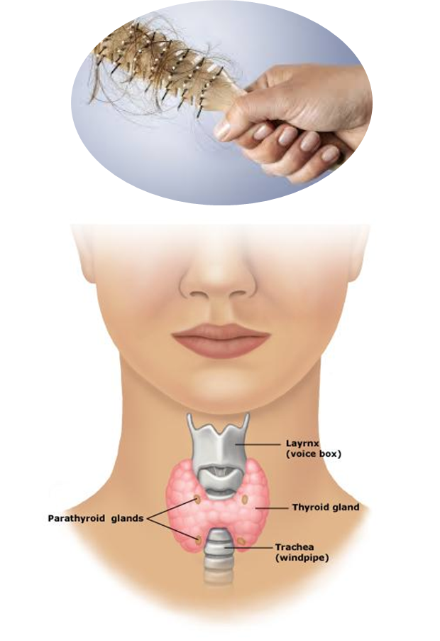Hair Loss Treatment For Thyroid Patients