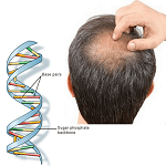 What's the connection between DNA and hair loss?